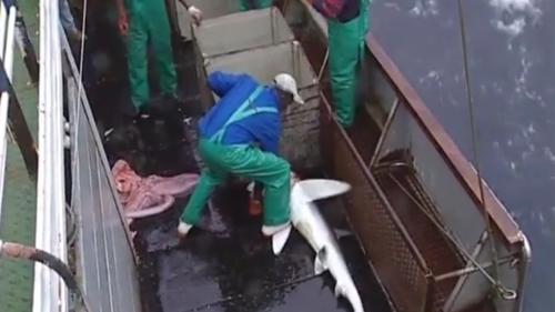Shark Fishing – Documentary Series